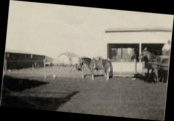 1910 horse in front of shop