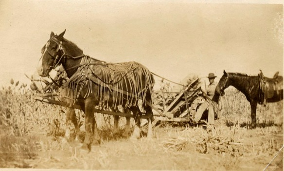 1910 nicholson horse implement